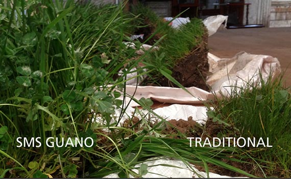 Soil Management Systems, Guano Trial