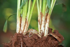 Healthy living soils help in times of drought.