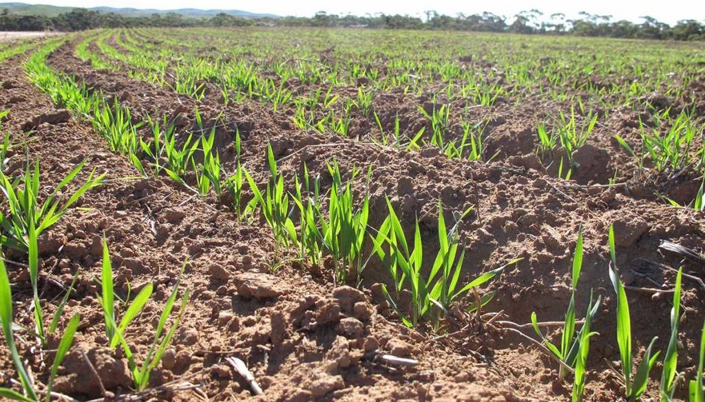 Healthy Soil for Immunity against Insects