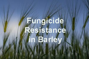 Fungicide Resistance in Barley